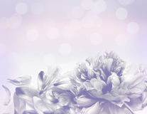 Beautiful flowers made with color filters - Abstrack background Royalty Free Stock Image
