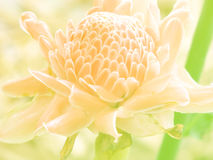 Beautiful flowers made with color filters background Stock Photography