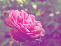 Beautiful flowers made with color filters background Royalty Free Stock Photo