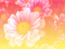 Beautiful flowers made with color filters background Stock Images