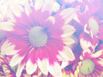 Beautiful flowers made with color filters background Royalty Free Stock Image