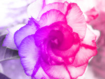 Beautiful flowers made with color filters background Stock Photo
