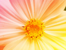 Beautiful flowers made with color filters background Royalty Free Stock Images