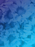Beautiful flowers made with color filters. Background Stock Photography