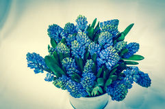 Beautiful flowers made with color filters. Beautiful blue flowers made with color filters Stock Photos
