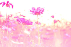 Beautiful flowers made with color filters Stock Images