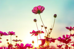 Beautiful flowers made with color filters Stock Image