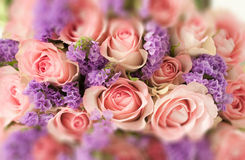 Beautiful flowers made with color filters in soft color and blur style for background, copy space for Woman Day Royalty Free Stock Images