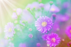 Beautiful flowers made with color filters, Soft focus. Beautiful flowers made with color filters, Soft focus Stock Photography