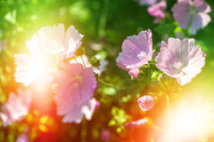 Beautiful flowers on magic garden background. toned Stock Images