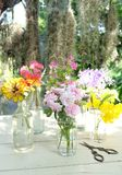 Beautiful flowers of many colors Stock Image