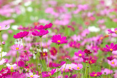 Beautiful flowers in the meadow Stock Photos