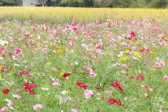 Beautiful flowers in the meadow Royalty Free Stock Image