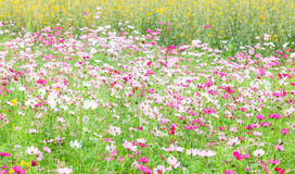 Beautiful flowers in the meadow.  Stock Image