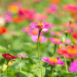 Beautiful flowers on a meadow Royalty Free Stock Photo
