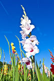 Beautiful flowers in the meadow Stock Images