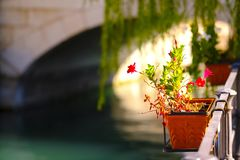 Beautiful flowers, morning light, water. Good quality photo of a typical street decoration: a garden pot with flower hanged somewhere at river with emerald green Royalty Free Stock Image
