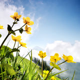 Beautiful flowers in the mountains Stock Image
