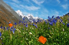 Beautiful flowers and mountains. Stock Photos