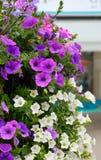 Beautiful flowers. Stock Image