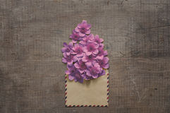 Beautiful flowers in the old envelope Stock Photos