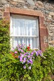 Beautiful flowers and old window Royalty Free Stock Photo