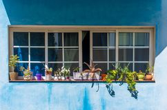 Beautiful flowers in the open close windows on blue canarian wall stock photos
