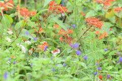Beautiful flowers orange and purple. Orange and purple flowers in green meadow Stock Image