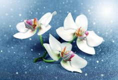 Beautiful flowers Orchid Stock Image