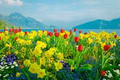 Beautiful flowers over lake Lucerne and mountains background in Switzerland. Beautiful flowers over lake Lucerne and mountains background, Switzerland Royalty Free Stock Photo