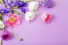 Beautiful flowers on paper background Royalty Free Stock Image