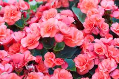 Beautiful flowers in park Royalty Free Stock Photography