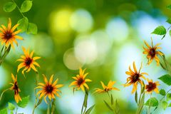 Beautiful flowers in the park on a green background Royalty Free Stock Photo