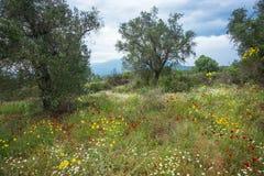 Beautiful flowers, Pelion, Greece Stock Photos