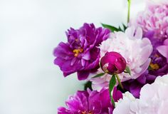 Beautiful flowers, peonies. Elegant bouquet of a lot of peonies of pink and red color close up.  stock photos