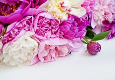 Beautiful flowers, peonies on white background. Elegant bouquet of a lot of peonies of pink color close up.  royalty free stock photos