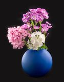 Beautiful flowers phloxes. In dark-blue to vase on black background Royalty Free Stock Photography