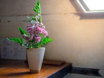 Beautiful flowers pink and green leafs in a white vase vintage on the wooden table beside window lighting stock image