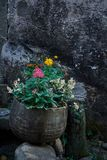 Beautiful flowers planted in Chinese-style flower pots. 。The background is mottled wall Royalty Free Stock Image