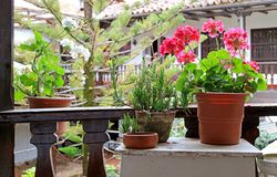 Beautiful flowers and plants at the balcony garden royalty free stock photo