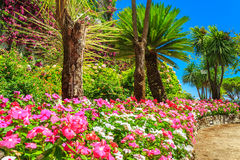Beautiful flowers,plants and trees,Rufolo garden,Ravello,Italy,Europe. Colorful flowers and palms in the ornamental garden,Villa Rufolo,Ravello,Amalfi coast Royalty Free Stock Photos