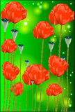 Beautiful flowers of a poppy Stock Image