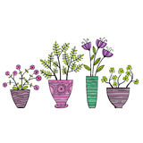 Beautiful Flowers In Pots, Vector Illustration. Stock Photos