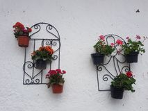 Flower Pots in the wall stock photo