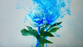 On beautiful flowers pouring paint. A beautiful white flower is pouring paint on a white background. Slow shooting in 4K format stock video footage