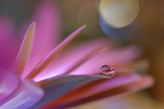 Beautiful flowers reflected in the water,artistic concept.Tranquil abstract closeup art photography.Floral fantasy design. Abstract macro photo with Flower and royalty free stock photo
