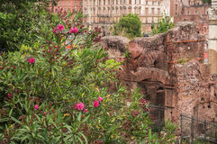 Beautiful flowers with Roman Forum on the background. Rome, Italy. Purple flowers with ancient Roman Forum on the background. Rome, Italy Royalty Free Stock Photography