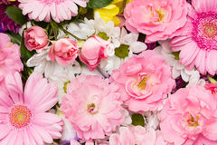 Beautiful flowers Royalty Free Stock Photo
