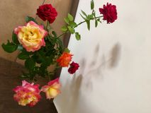 Happy birthday. Beautiful flowers roses royalty free stock images