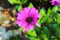 Beautiful flowers in the royal park rajapruek of Thailand. Royalty Free Stock Photos